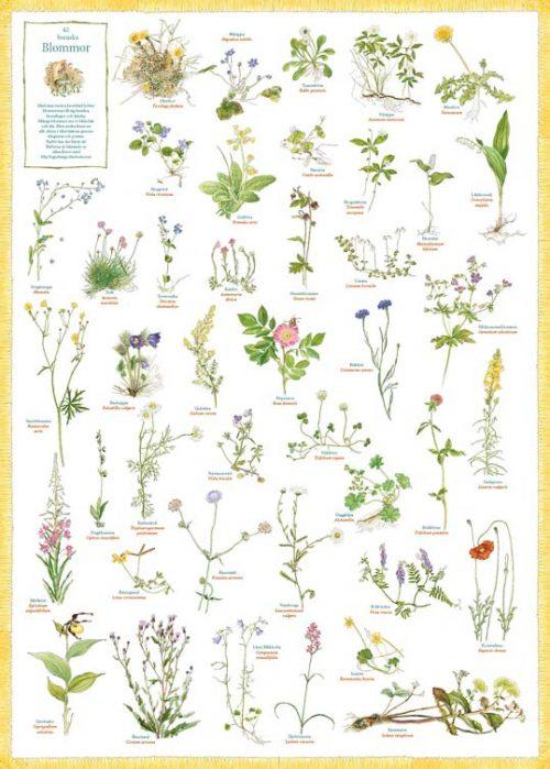 Poster Zweedse planten